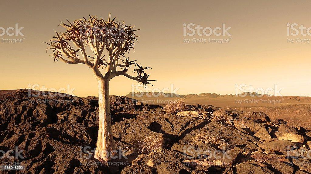 Quiver tree succulent arid dry desert rocks landscape sepia stock photo