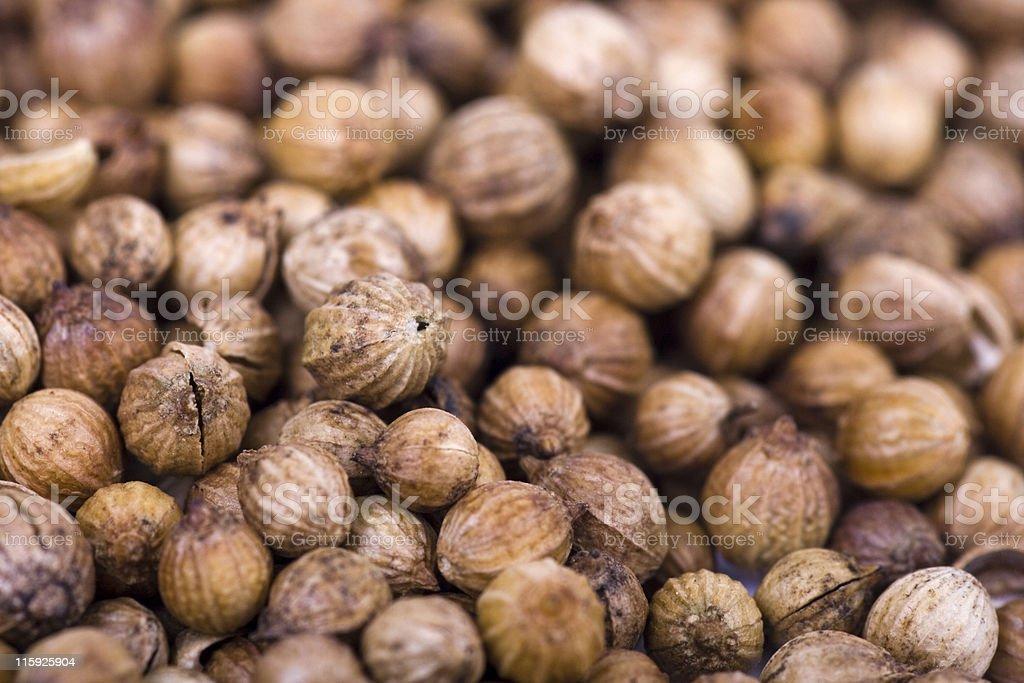 """Coriandrum sativum"" or  coriander royalty-free stock photo"