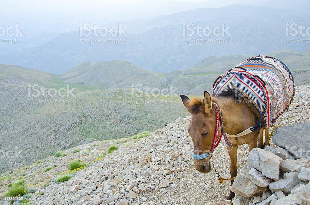 """Donkey taxi"", Mount Nemrut, Turkey royalty-free stock photo"