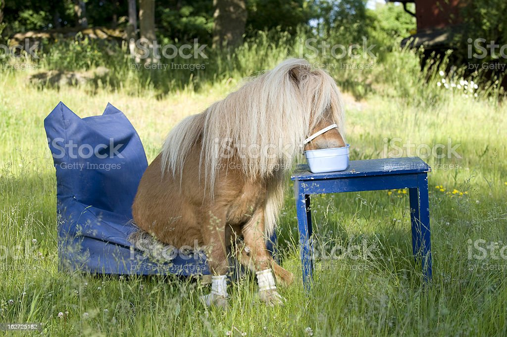 qute pony eating at the table stock photo