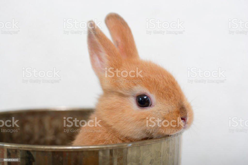 Rabbit & accessories stock photo