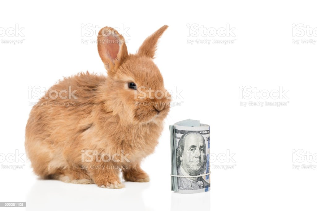 Rabbit and a bundle of money stock photo