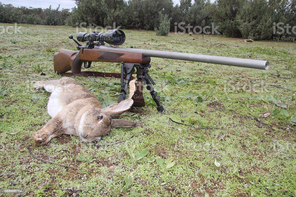 Rabbit and rifle stock photo