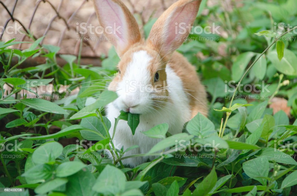 Rabbit are eating stock photo