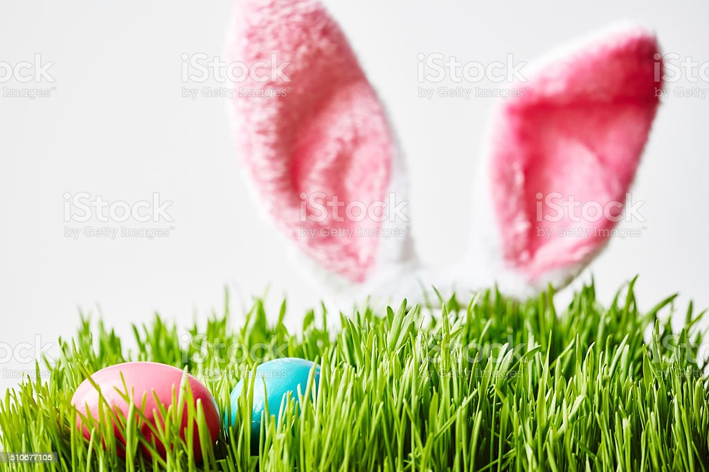 Rabbit brought Easter eggs stock photo
