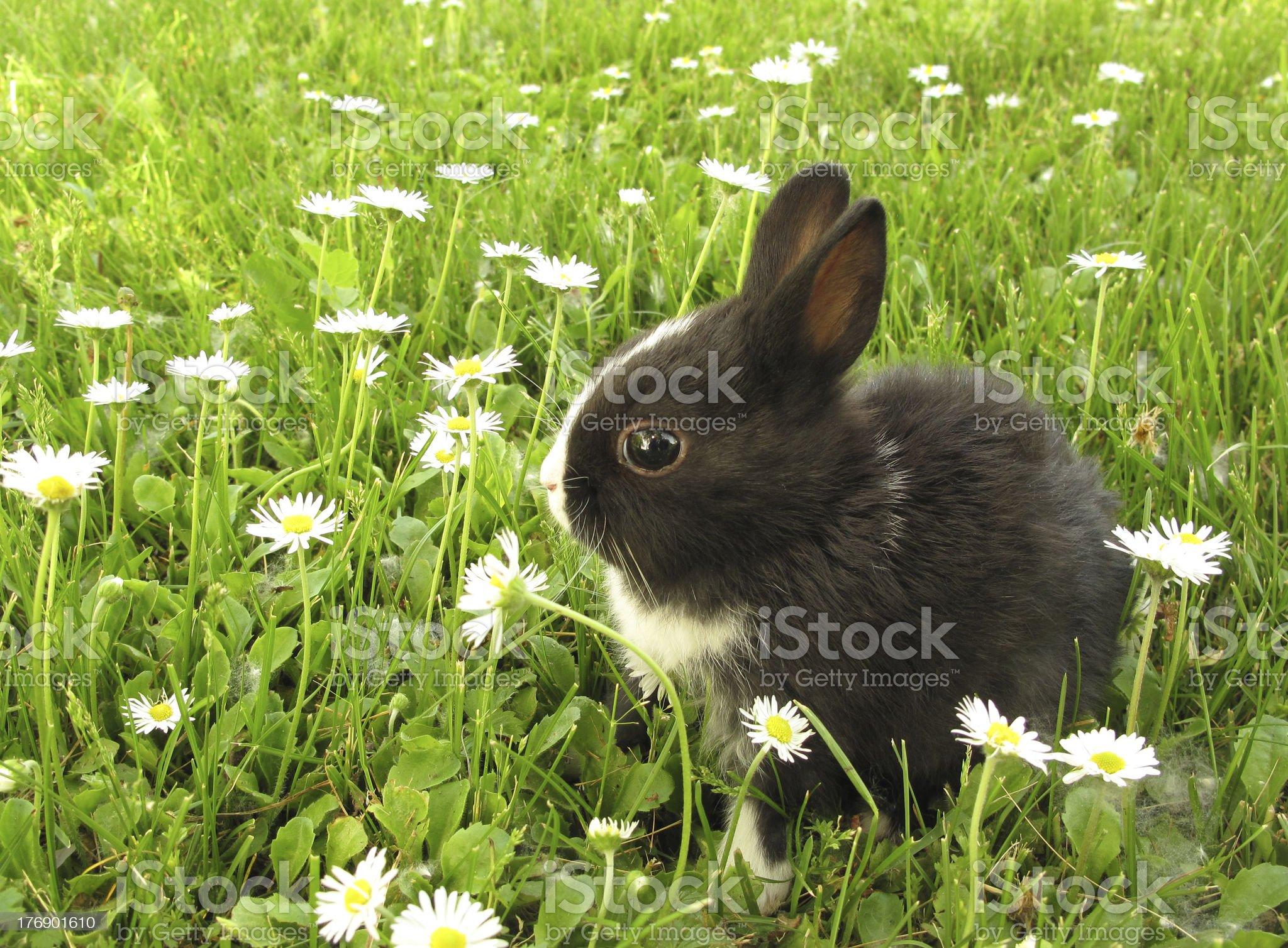 Rabbit bunny black and white royalty-free stock photo