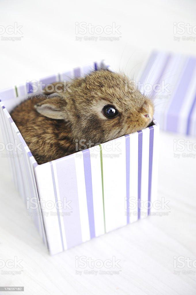 Rabbit cute baby royalty-free stock photo