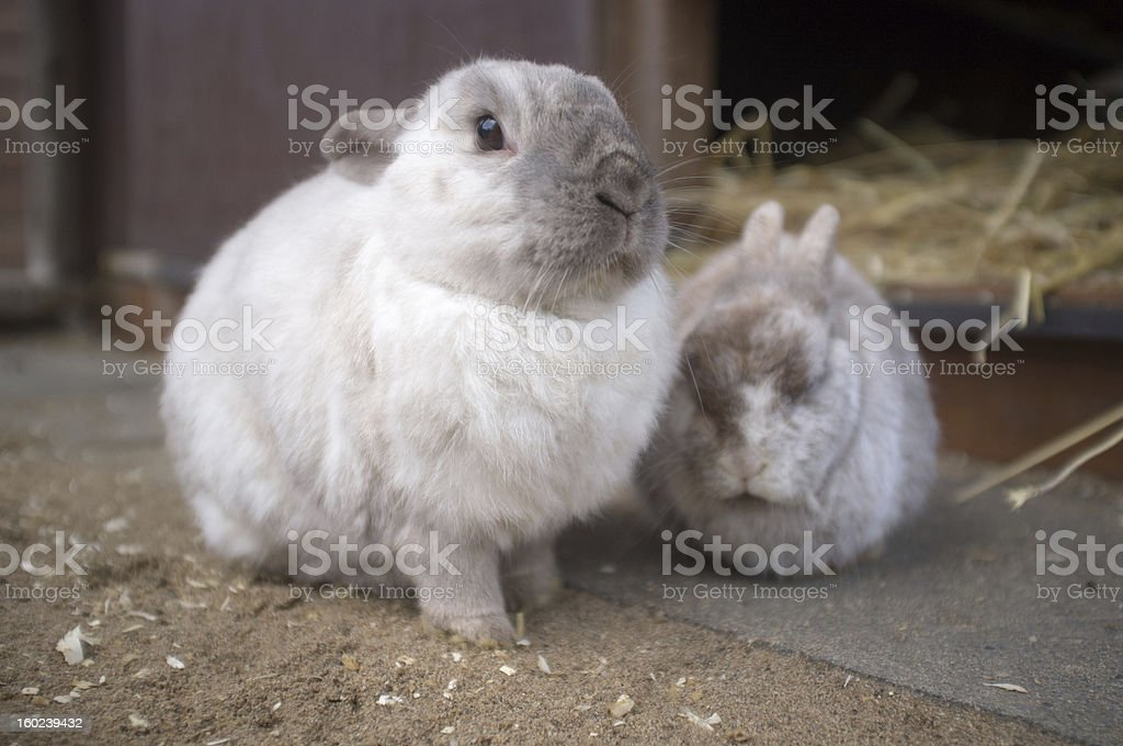 Rabbit family in front of their house. royalty-free stock photo