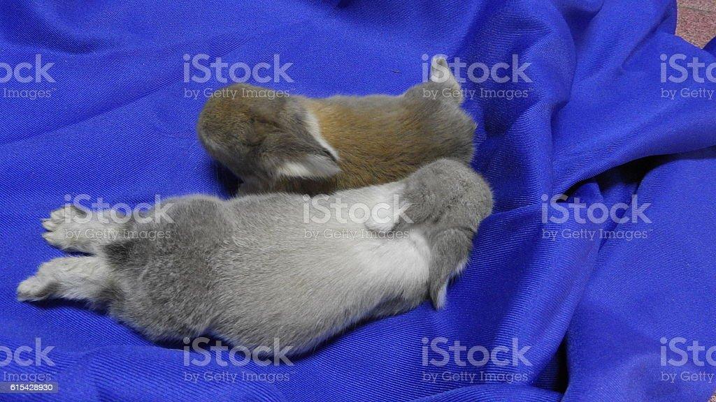 Rabbit Family stock photo