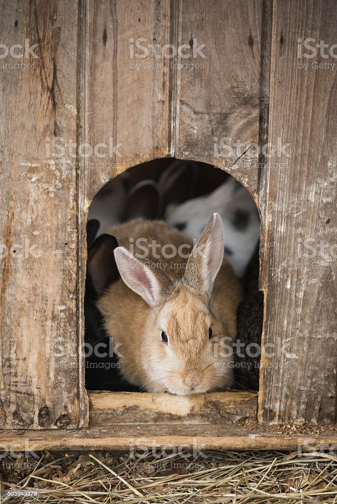 Rabbit hutch stock photo