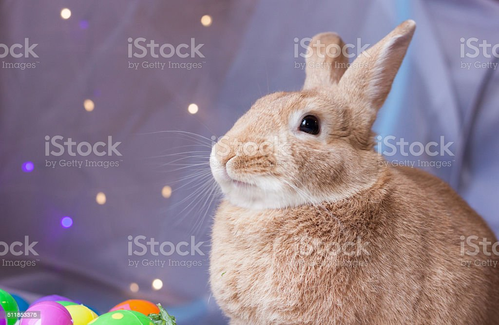 Rabbit in rufus color ready for Easter stock photo