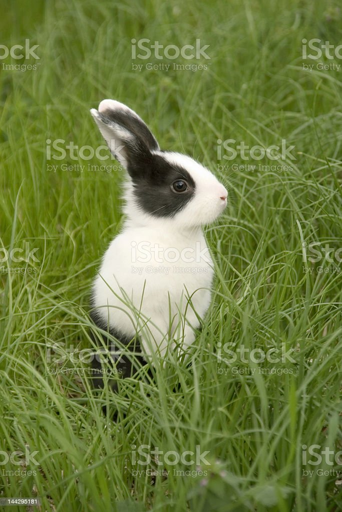 rabbit in the grass stock photo