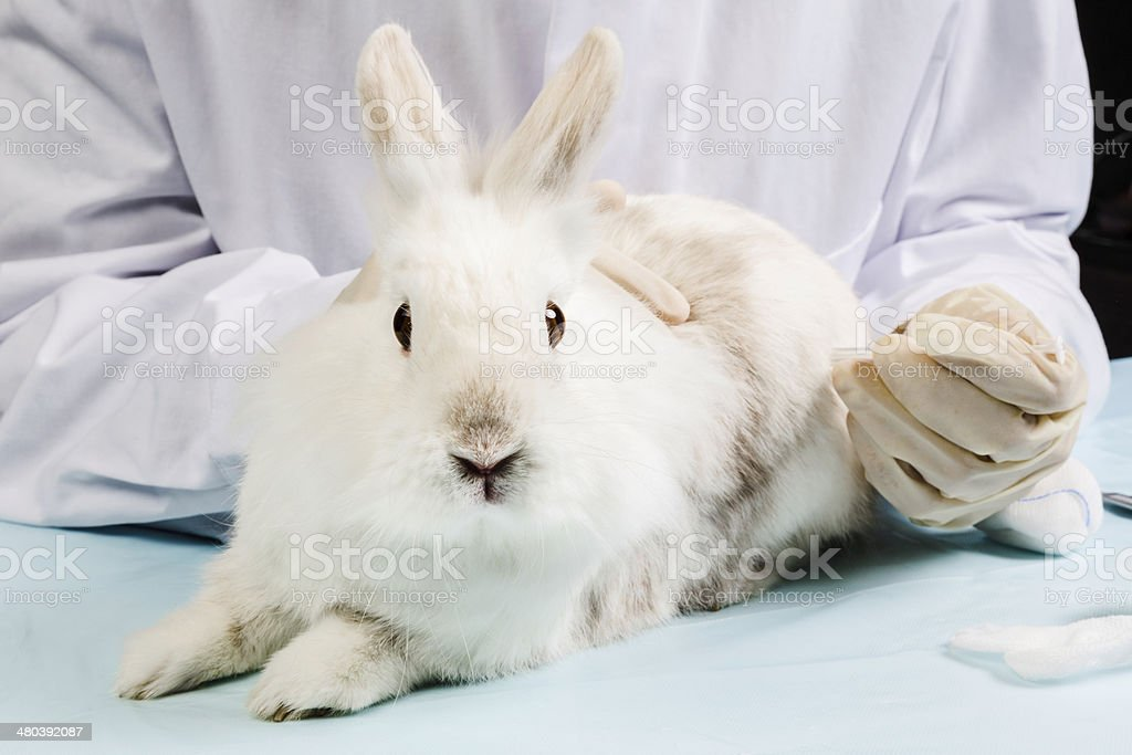 Rabbit is injected by veterinarian stock photo