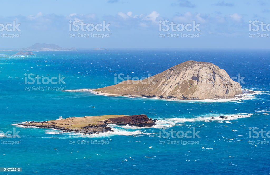 Rabbit island Close up stock photo