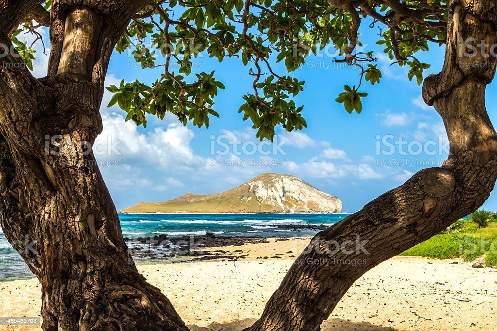 Rabbit Island stock photo