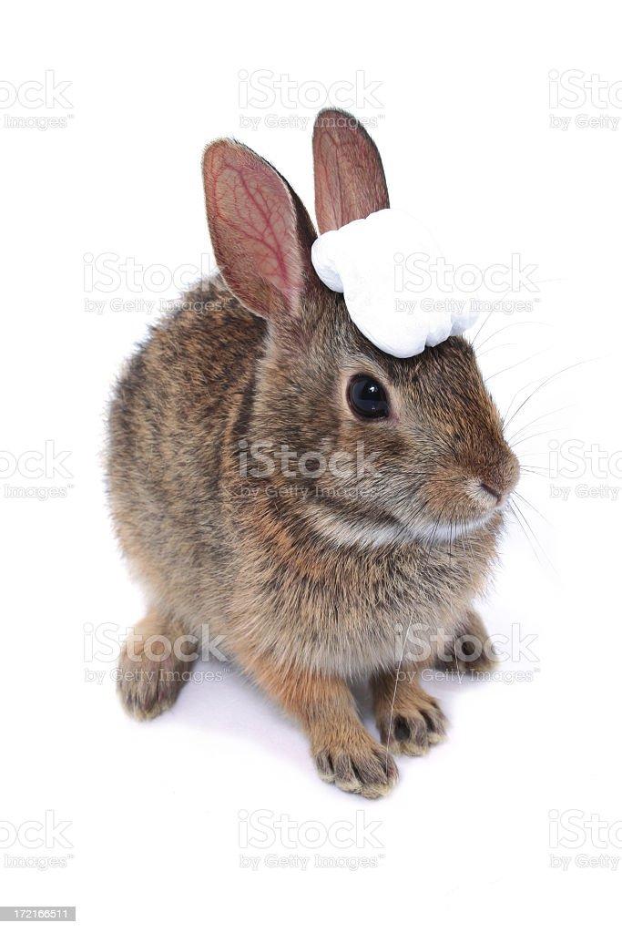 Rabbit judge royalty-free stock photo