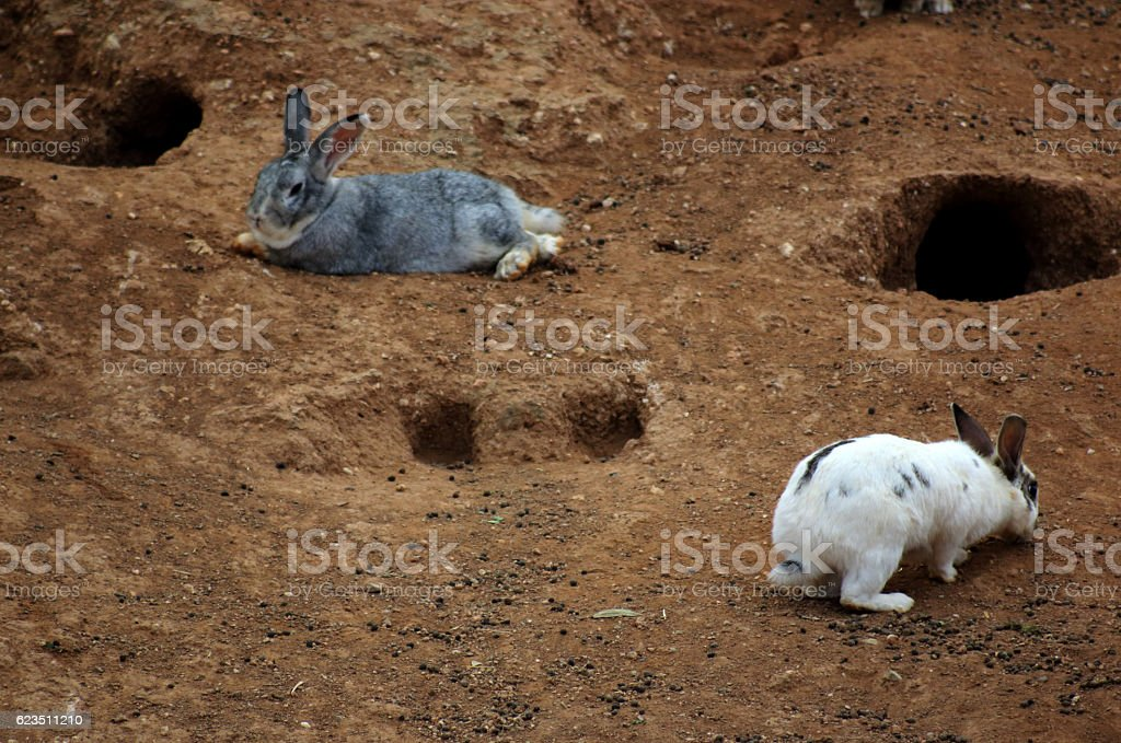 Rabbit love stock photo