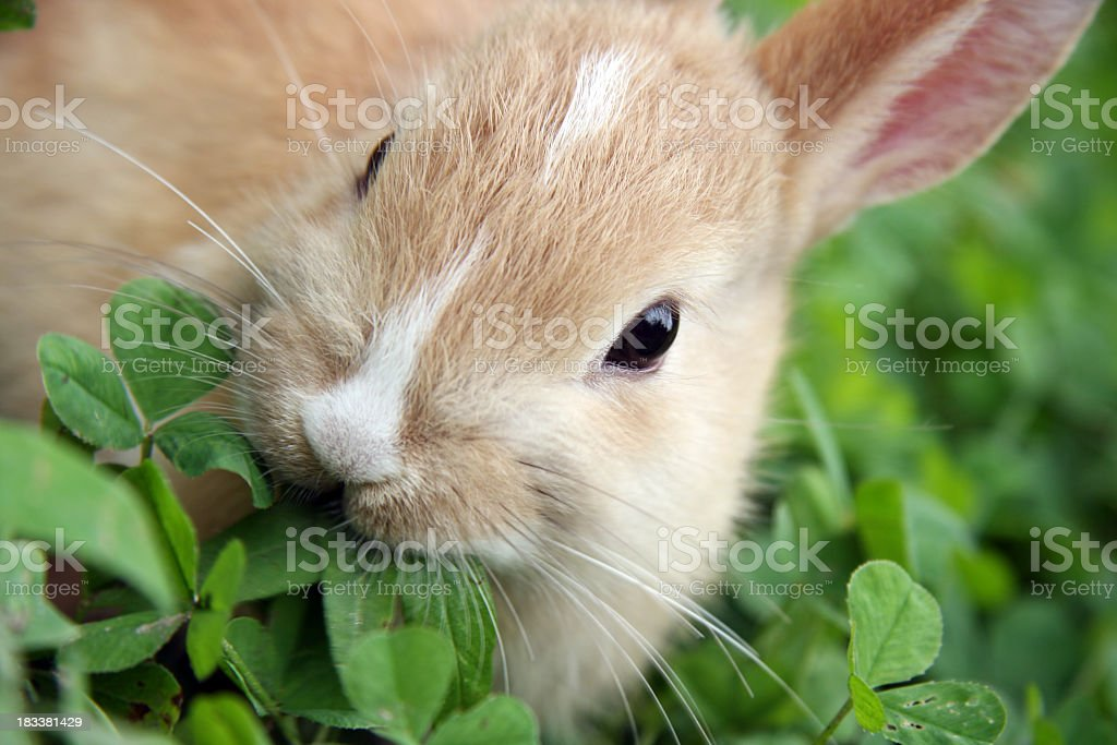 A rabbit munching the leaves of a green plant stock photo