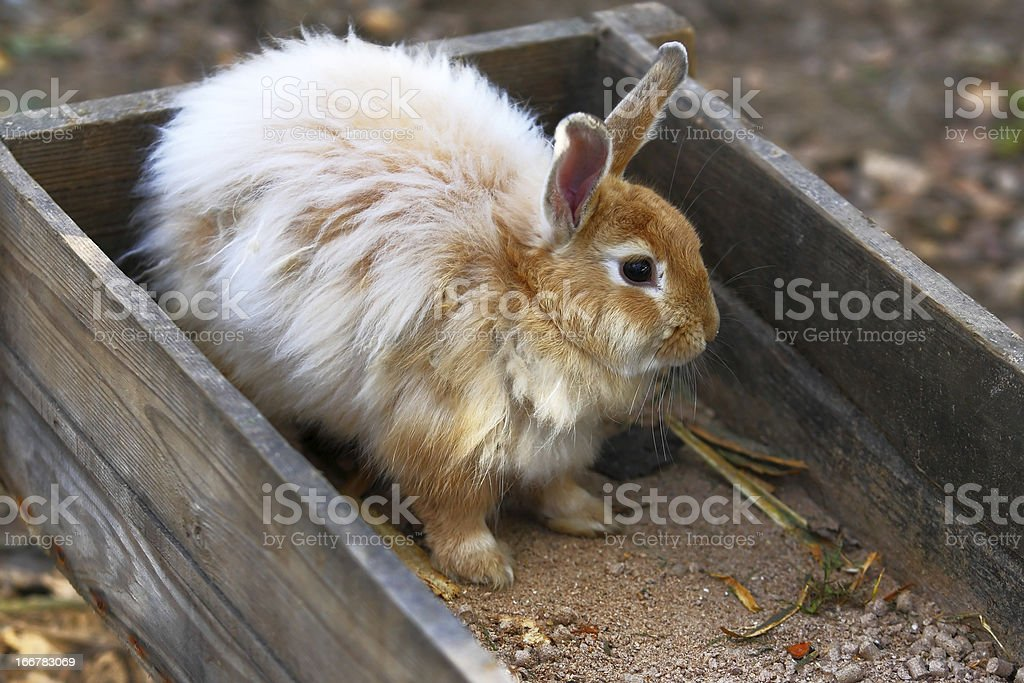 Rabbit on a farm stock photo