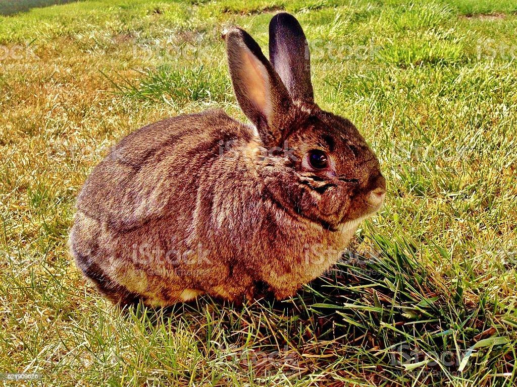 Rabbit on Green Grass stock photo