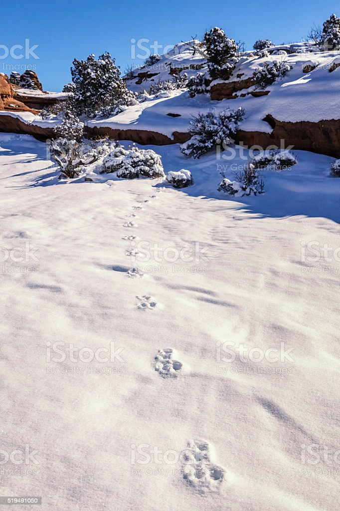 Rabbit Paw Snow Foot Prints - Arches National Park stock photo