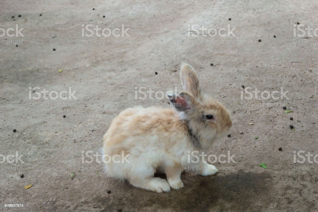 Rabbit played on the ground stock photo