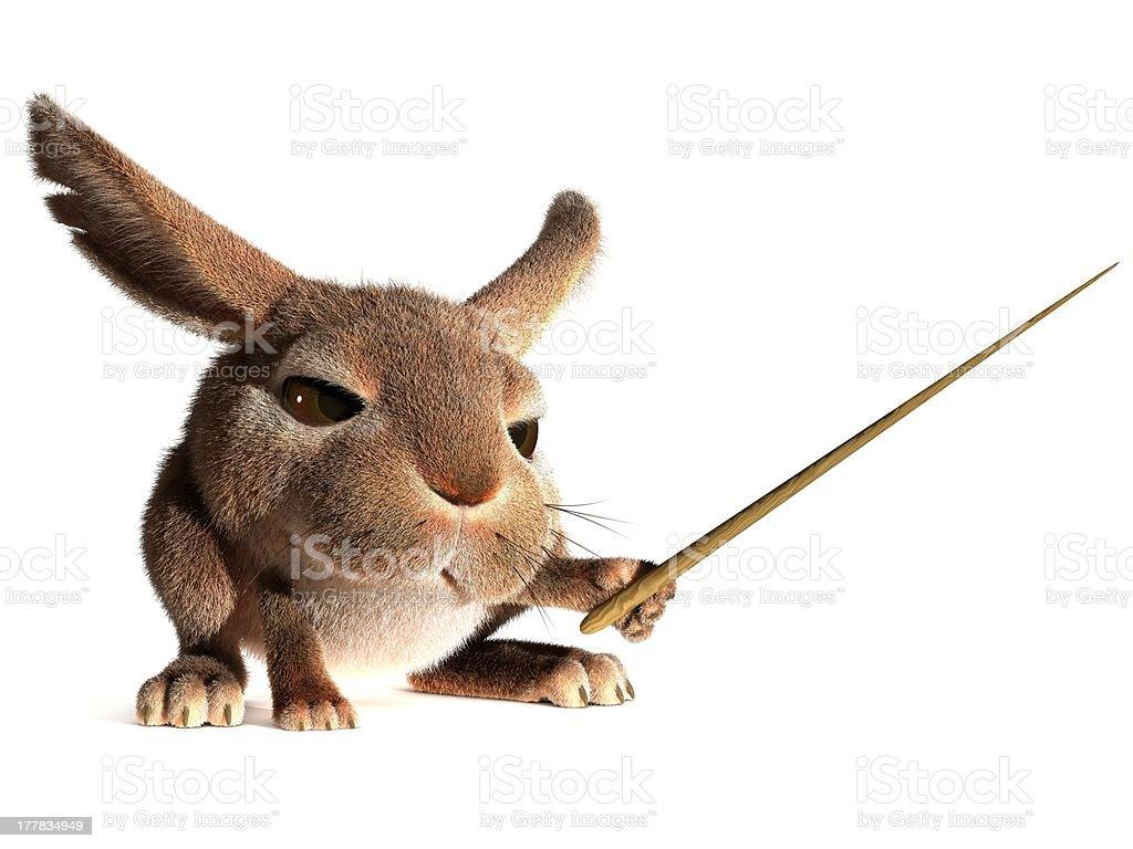 Rabbit teacher royalty-free stock photo