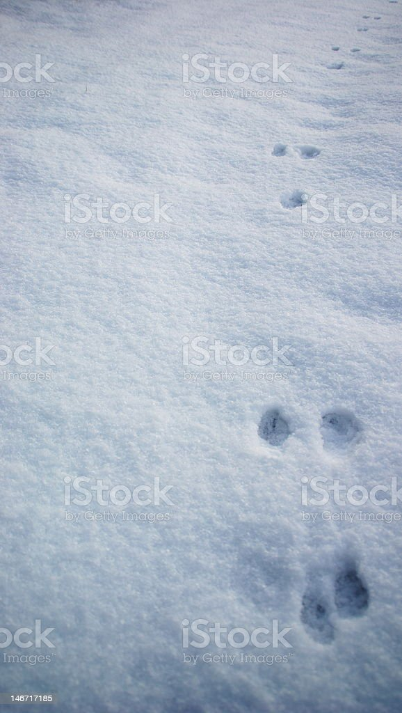 Rabbit Tracks in Early Morning Snow royalty-free stock photo