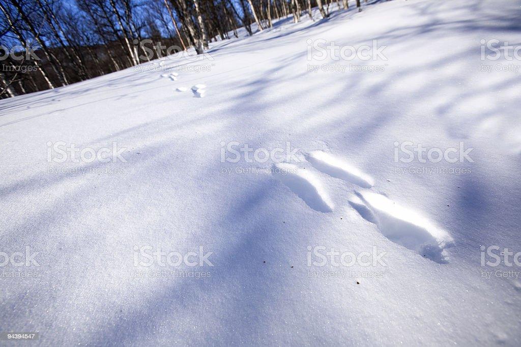 Rabbit Tracks in Snow royalty-free stock photo