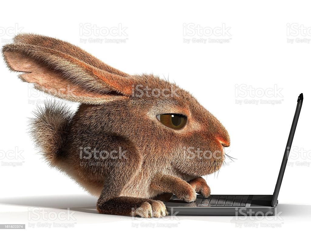 Rabbit using a laptop stock photo