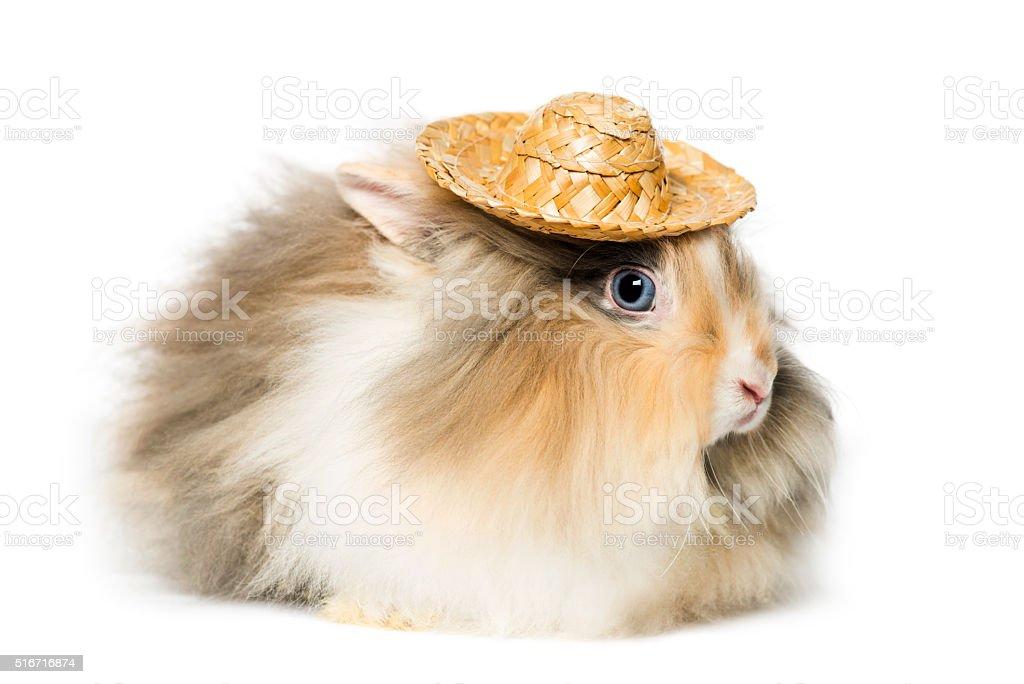 Rabbit wearing a straw hat stock photo