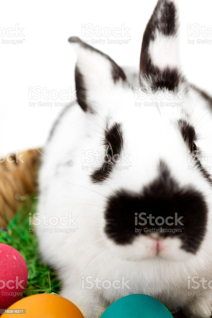 Rabbit with Easter eggs royalty-free stock photo