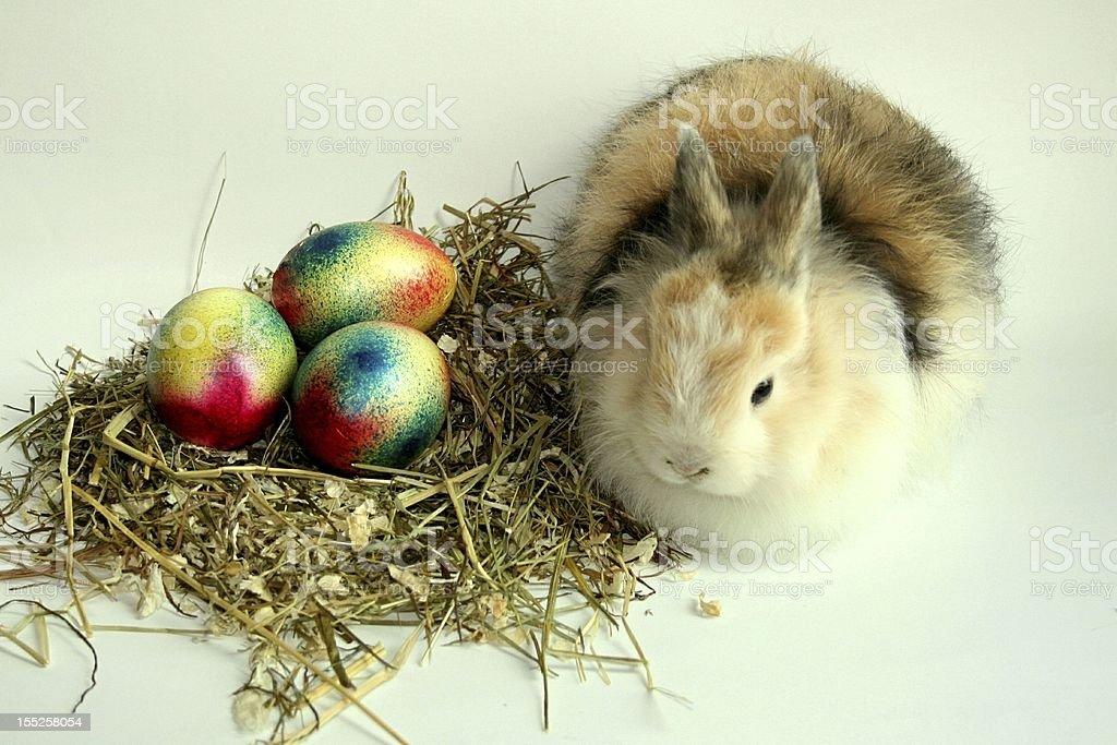 Rabbit with eggs stock photo