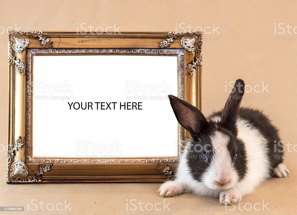 Rabbit with picture frame for a text writing stock photo