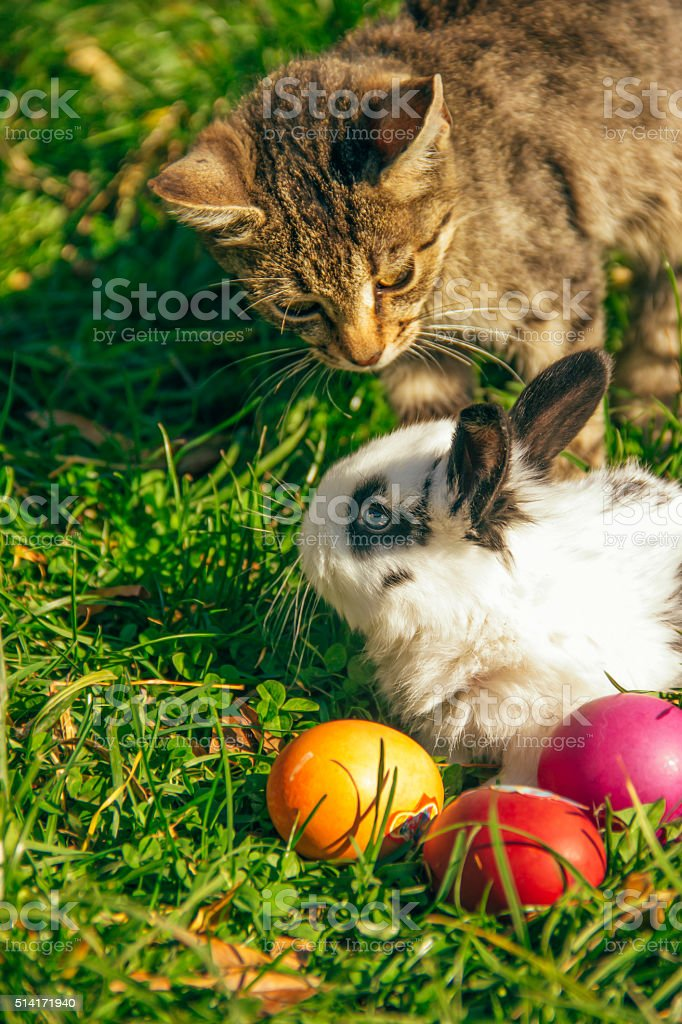 rabbit,cat and Easter eggs stock photo