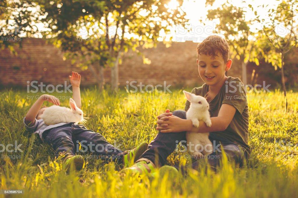 Rabbits and cute boys stock photo