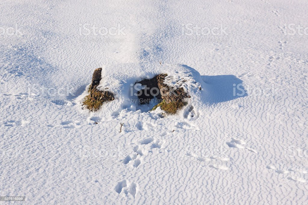 Rabbits run for cover but tracks lead to their warren stock photo