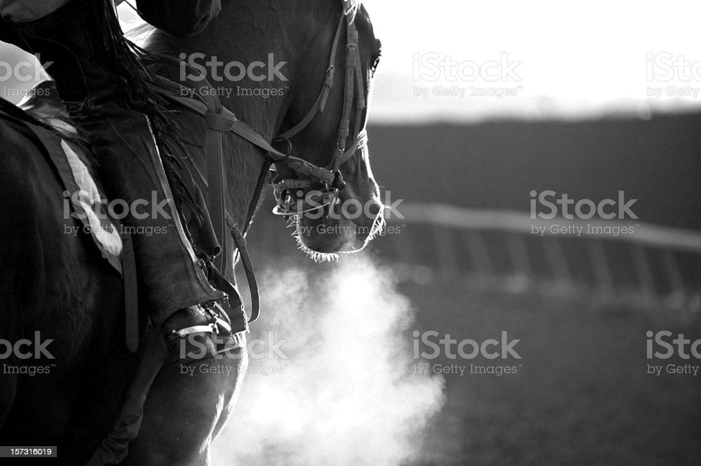 Race Horse Galloping stock photo