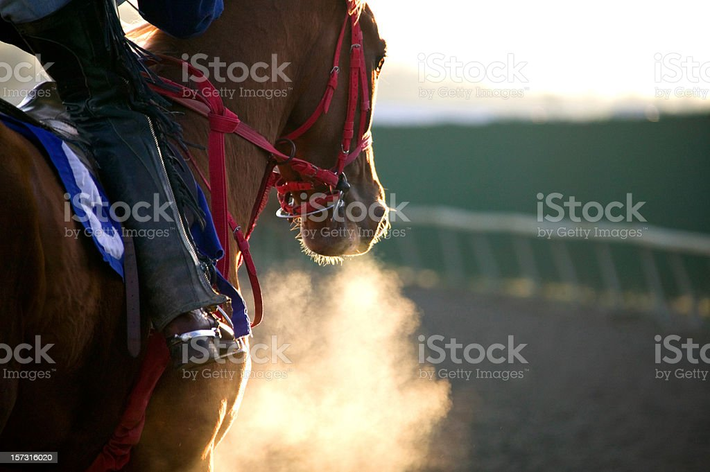 Race Horse Galloping-color stock photo