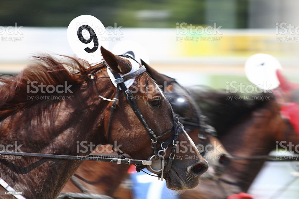 Race horse stock photo