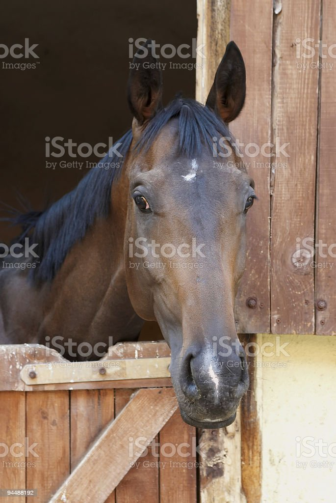 Race Horse Series royalty-free stock photo