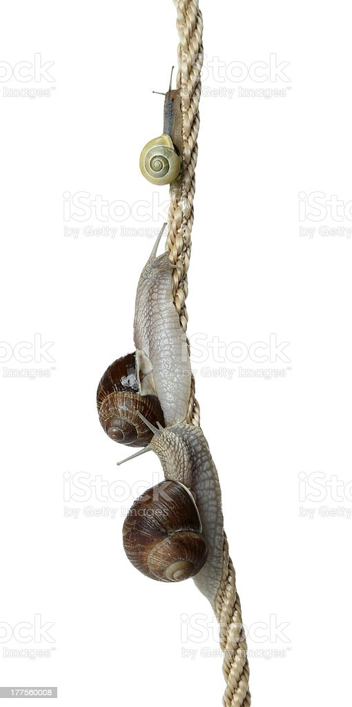 race of snails two climb a cord stock photo