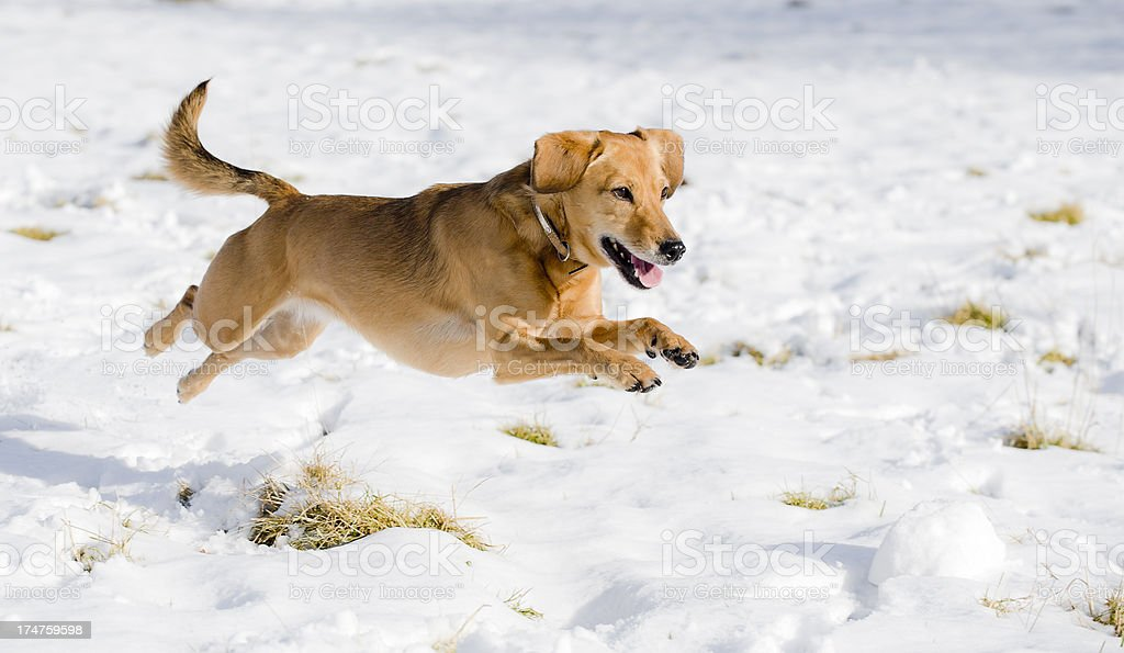 race through the snow royalty-free stock photo