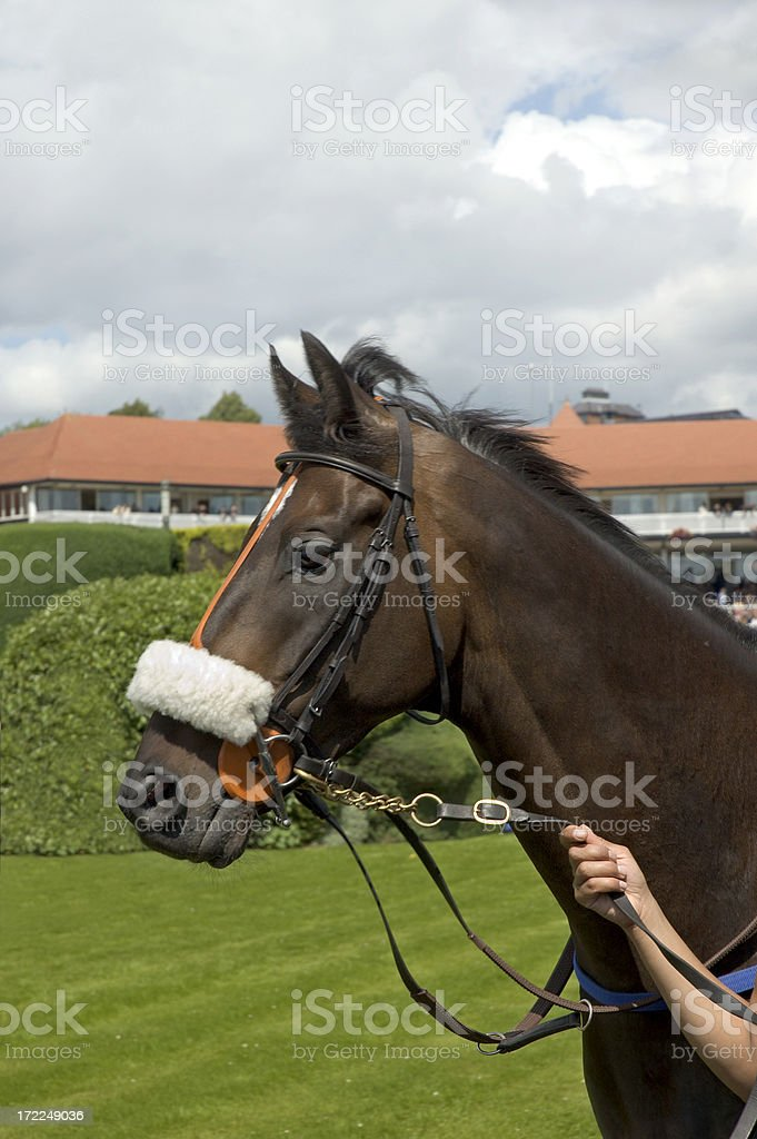 Racehorse royalty-free stock photo
