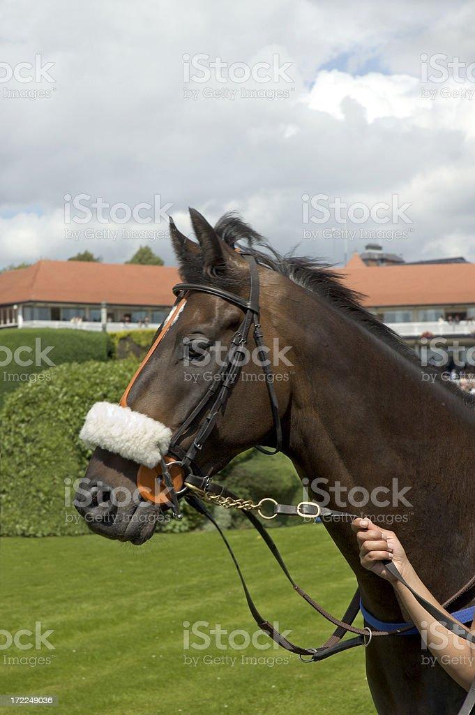 Racehorse stock photo