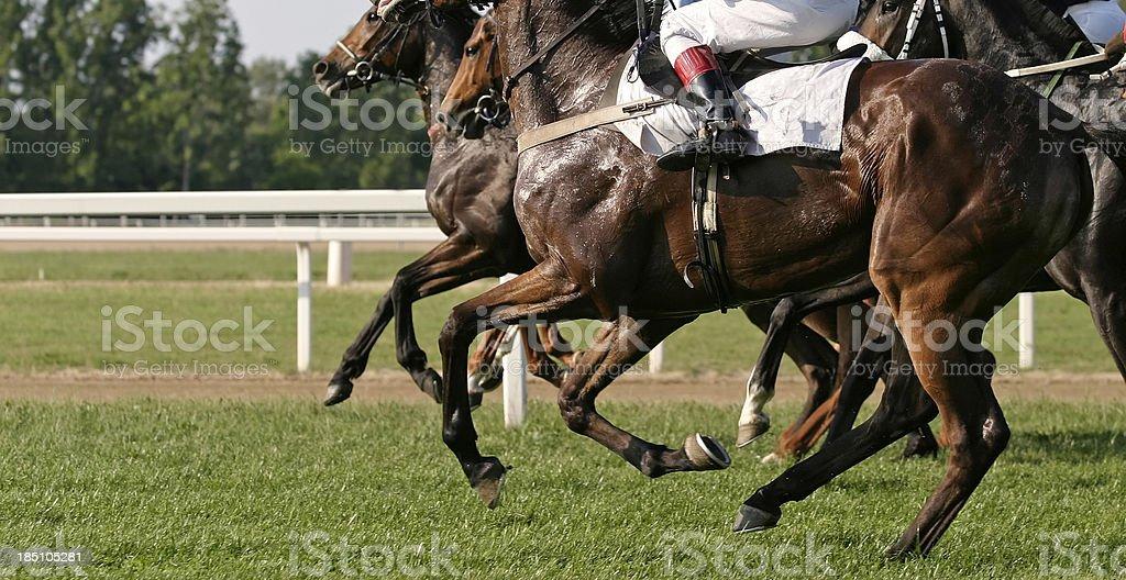 Racehorses stock photo