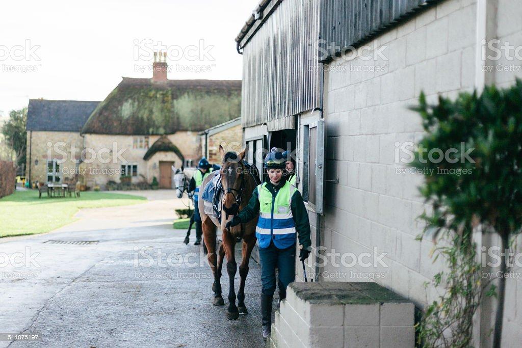 Racehorses, returning stock photo