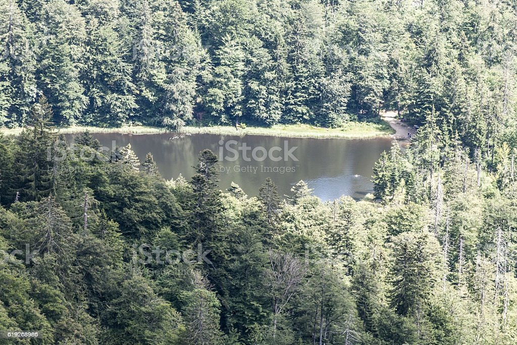 Rachelsee mountain lake with forest around in Bavarian Forest stock photo