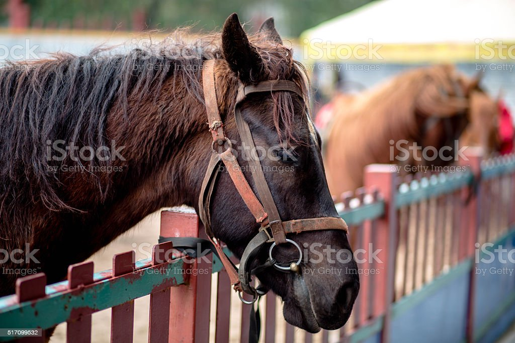 racing horse beside fence stock photo