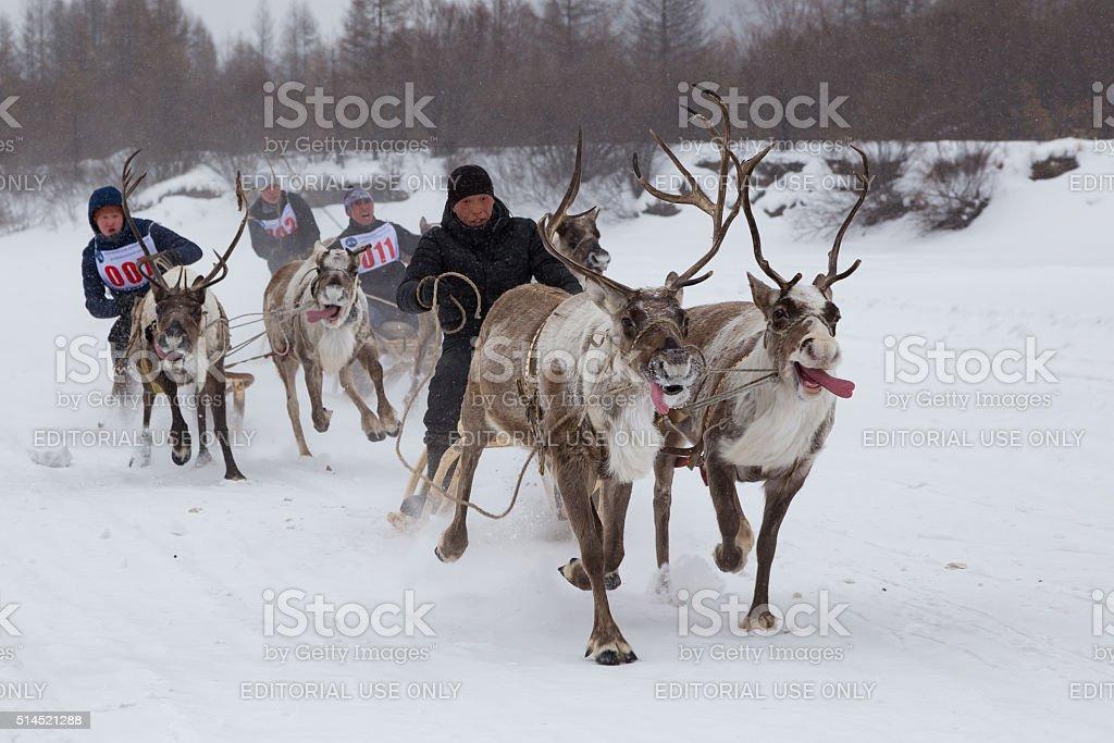 Racing on the reindeer stock photo